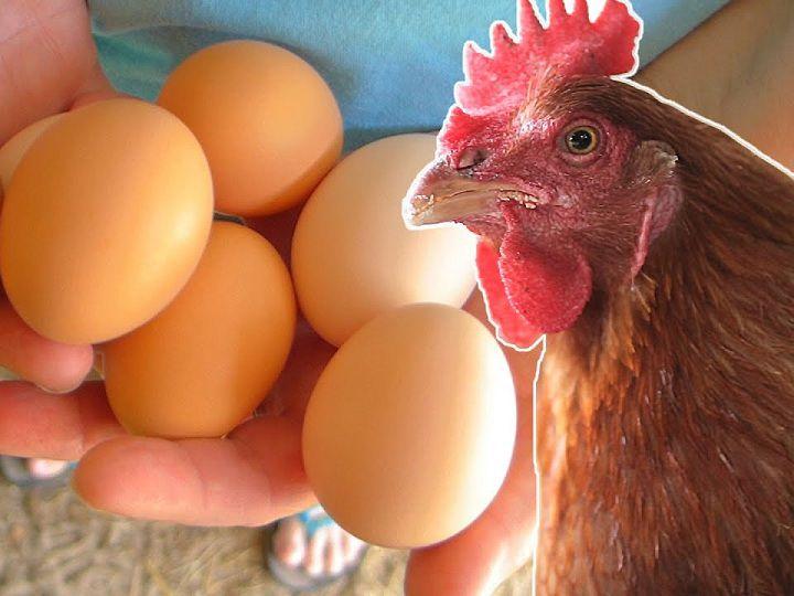 Cách bảo quản sử dụng trứng gia cầm