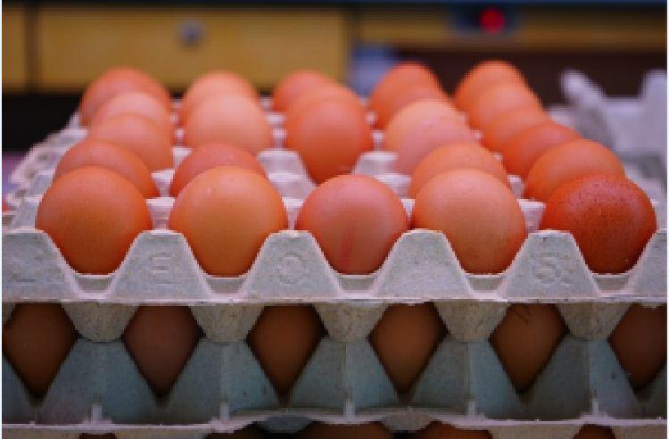 Cách phân biệt trứng còn tươi