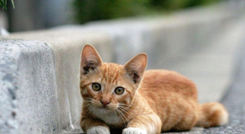 Chọn một nơi thuận tiện trong nhà để làm chỗ ở cho mèo