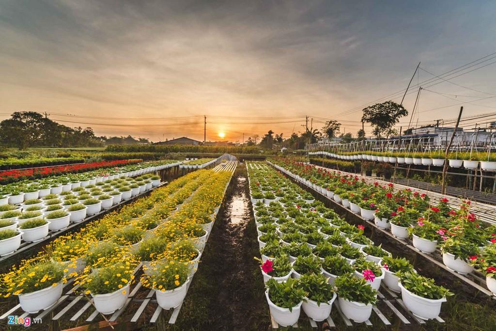 Làng hoa Sa Đéc khoác lên mình đầy đủ sắc màu từ hàng ngàn loại hoa