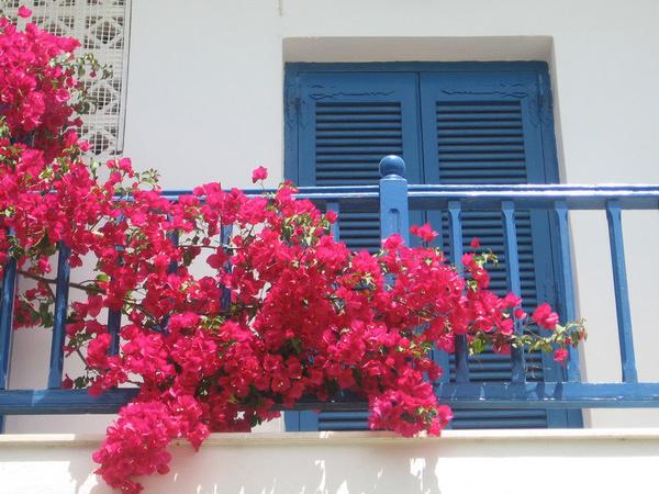 Những loại hoa làm ban công nhà bạn trở nên rực rỡ nhiều màu sắc