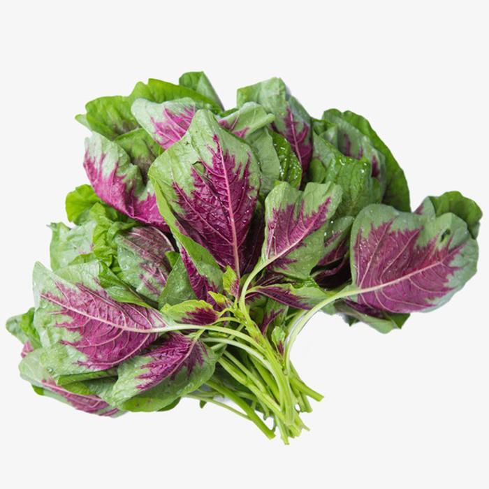 Rau dền hoặc củ dền là loại rau cung cấp canxi rất tốt cho sức khỏe