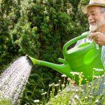 Tất tần tật các mẹo trồng rau trong thùng xốp cực dễ làm