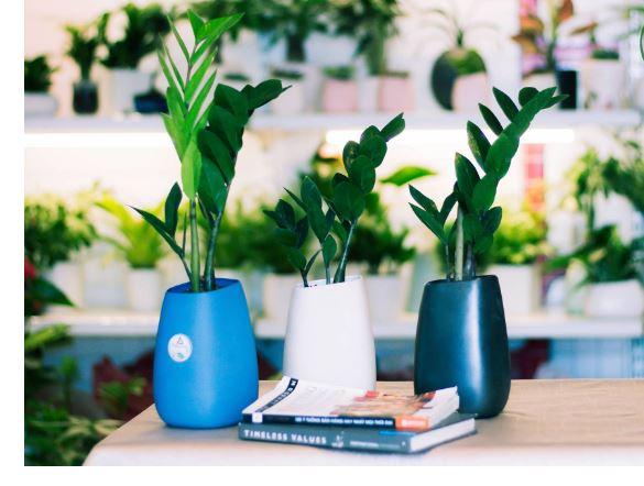 Trang trí chỗ làm việc với nhiều loại cây giúp không gian văn phòng trở nên xanh mát