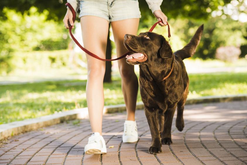 cún đi dạo