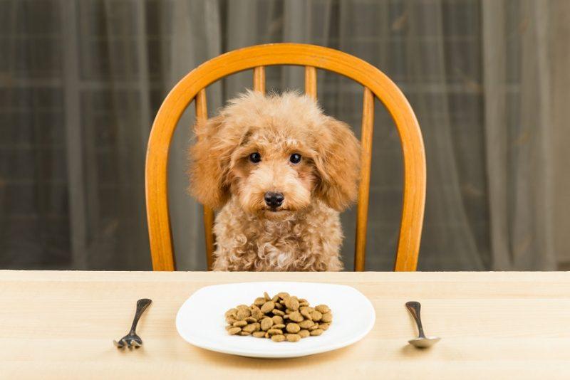 chó cưng ăn uống