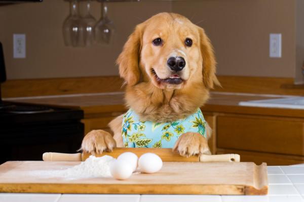 chó cưng nấu ăn