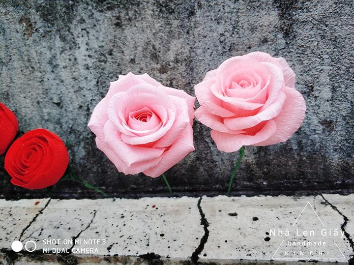 hoa giấy nhún KChand