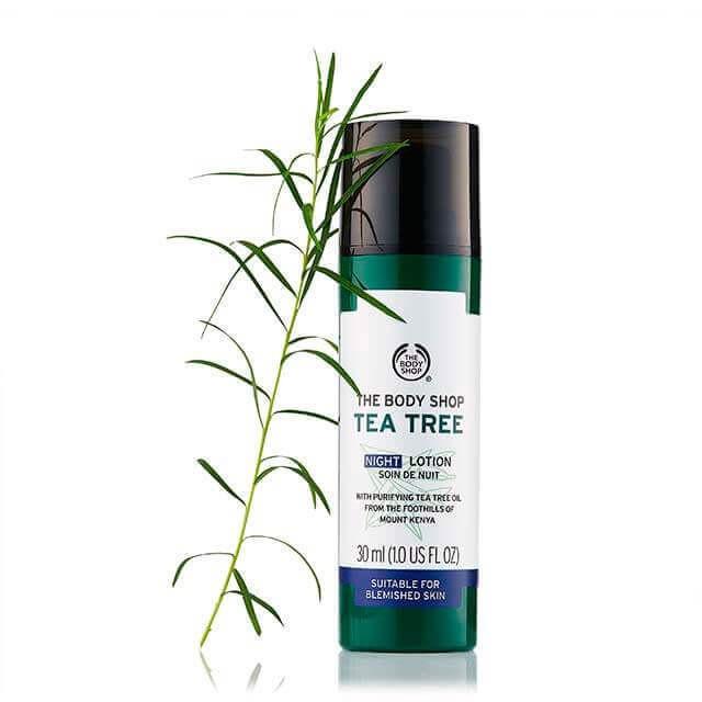 tea tree night lotion 4 640x640