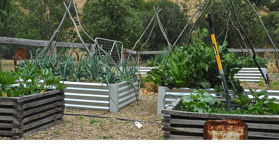 vườn nâng bằng gỗ và tấm ngói tôn