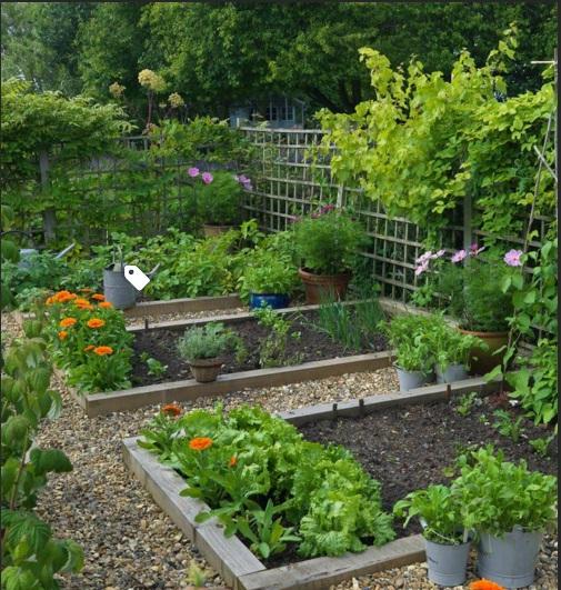 vườn nâng vằng gỗ 1