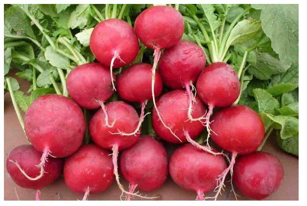 Củ cải đường chứa nhiều nitrat tốt cho lưu thông máu lên não