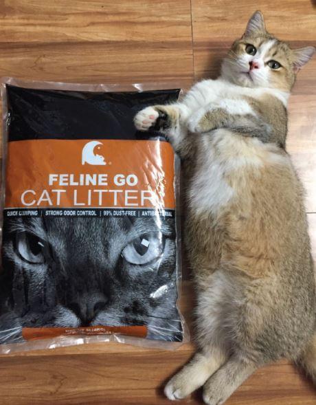 Cát Feline Go có độ vón cục cao