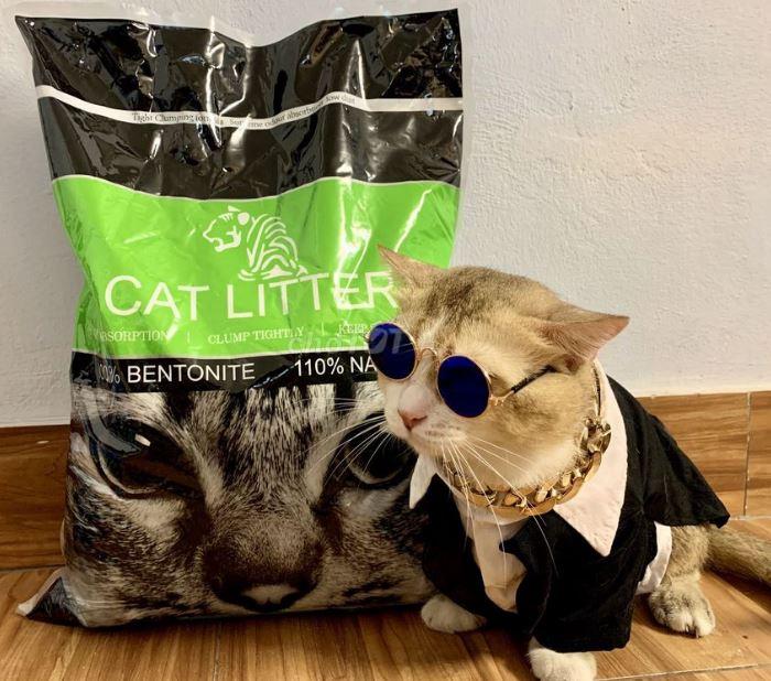 Cat Litter cũng rất được ưa chuộng