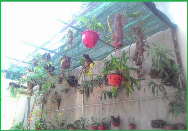 Làm mái che cho phong lan