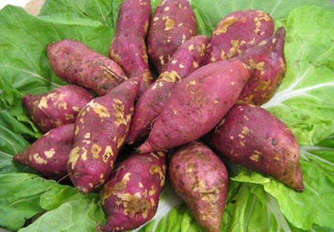 ban co biet vitamin a duoc chua nhieu trong thuc pham nao 45224 5