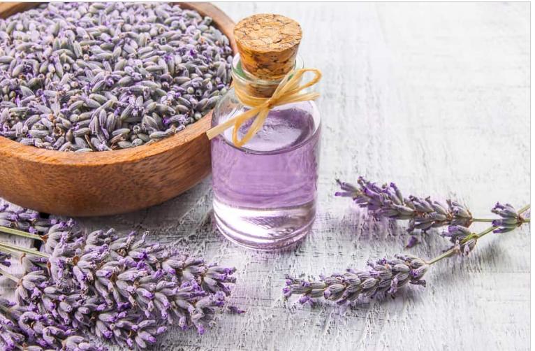 Tác dụng của tinh dầu hoa oải hương bạn đã biết chưa